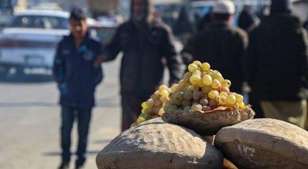grapes-1611330693.jpg