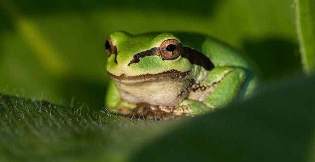 2144582-frog-1613578533.jpg