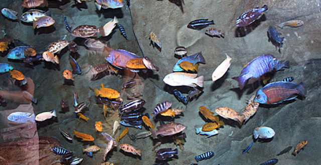 2145507-fishdiversity-1613823705.jpg