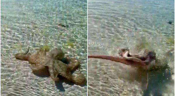 octopus-1617376109.jpg