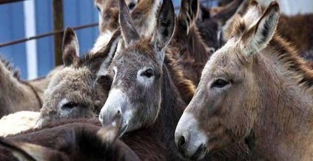 2188454-donkeys-1623332471.jpg