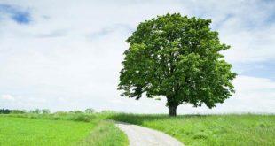 2204111-tree-1626709980.jpg