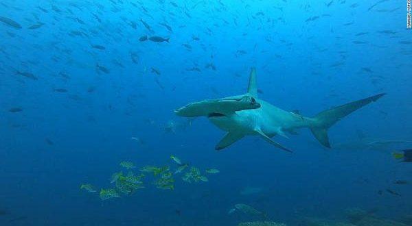 shark-1626624867.jpeg